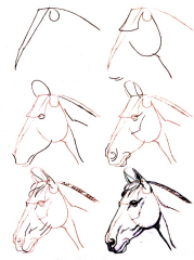 comment dessiner un fer a cheval
