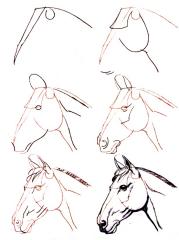 Dessiner un cheval comment faire for Peindre facilement