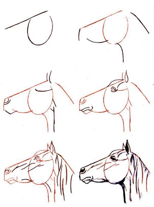 Dessiner un cheval une tete de cheval levee - Dessin facile de cheval ...